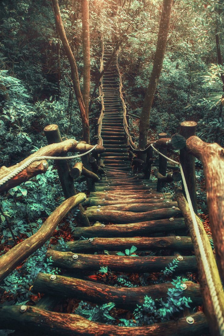 ~~A adventure's beginning | view from the top of a forest mountain path | by Hanson Mao~~