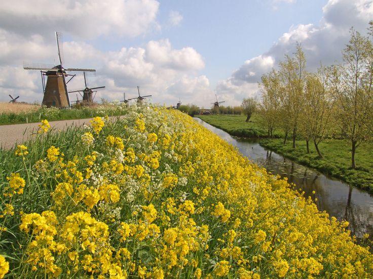voorjaar molens van Kinderdijk