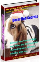 After all the frustration to find out the truth on how to make a Boxer healthy, happy and obedient, I have created 'Boxer Secrets'.  *** Training Methods For Boxer Dog. Boxer Dog Training Routine. Boxer Dog Breed. Boxer Dog Diet. ***  Boxer Dog For Sale, Boxer Dog Price, Boxer Dog Training, Boxer Dog Names, Boxer Dog Facts, Boxer Dog Diet, Boxer Dog Information, Boxer Dog Food, Boxer Dog Training To Attack, Boxer Dog Training Videos, Boxer Dog Puppy, Boxer Dog Information, Boxer Dog Breed…