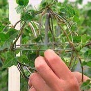 how to make an english ivy topiary P. Allen Smith Garden Home