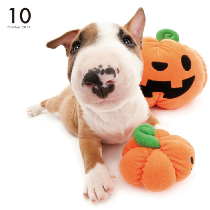 Artlist Collection THE DOG Bull Terrier calendar