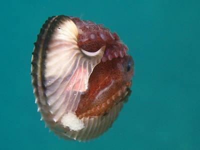 Mollusk Facts: Habitat, Behavior, Diet   Types of octopus ...