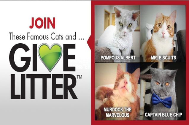 Help Fill Shelter Litter Boxes By Voting For A Celebrity #Cat!