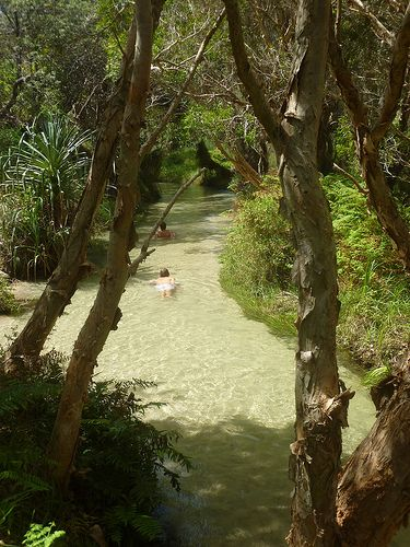 This photo brings back some very funny memories and definitely my favourite place in Australia. Eli Creek, Fraser Island.