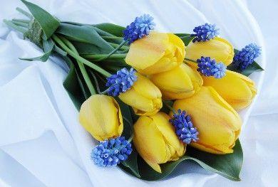 Αποστολή Λουλουδιών στην Αθήνα | 21Flowers.gr