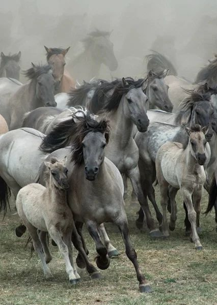 Wild Horses in Germany