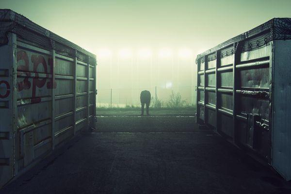roaming at night by Lukas Furlan, via Behance