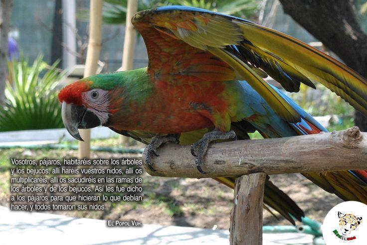 Vosotros, pájaros, habitaréis sobre los árboles y los bejucos... POPOL VUH