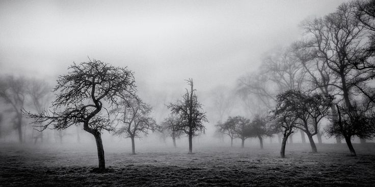 the silent winterday by piet flour on 500px
