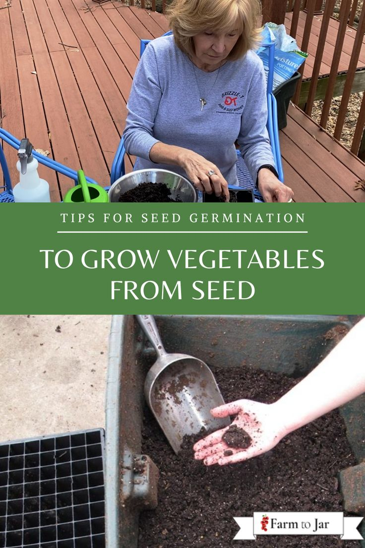 how to germinate pepper seeds in soil