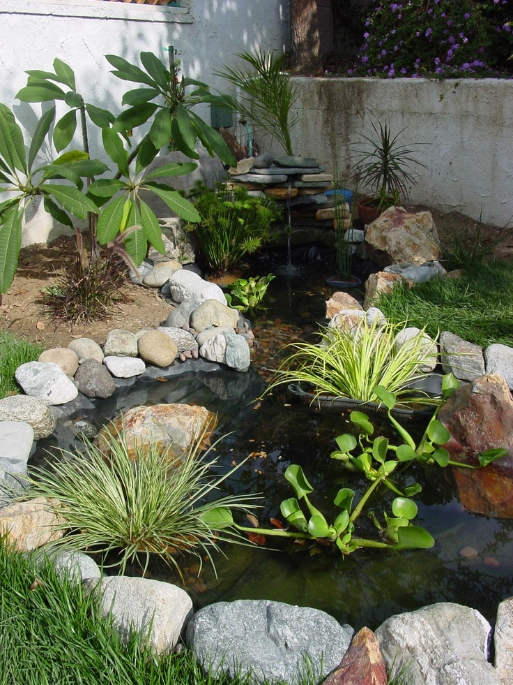 My first and only attempt at a water garden. This happened in my back yard and lasted about 9 months, when it was turned into a sandbox for my adoptive grandsons.