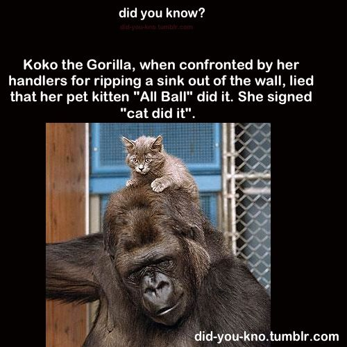 32 best images about koko on pinterest the amazing