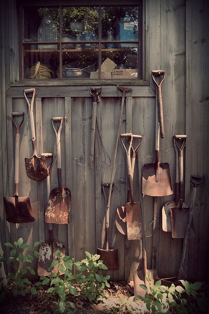 old rusty shovels as garden art