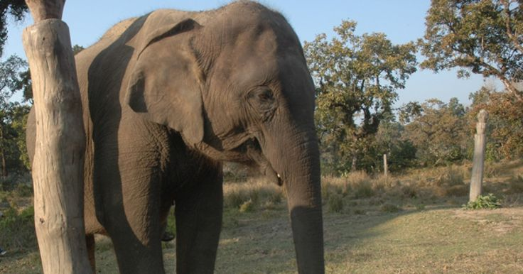 Cruelty to elephants shouldn't be part of anyone's vacation plans.
