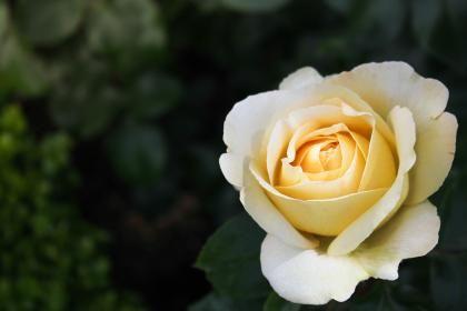Flower images - Free stock photos on StockSnap.io