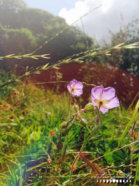 Wildflower. Photos by ©Cristina Pandolfo - www.cristinapandolfo.com - www.dryadesdesign.com