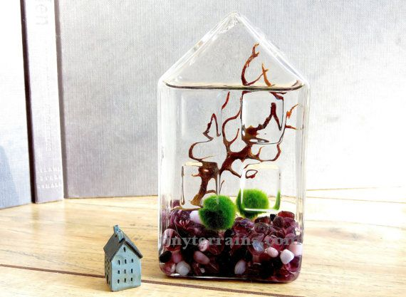 Marimo Terrarium - Super Cute Marimo Moss Ball Glass House Aquarium , Several Colors Available