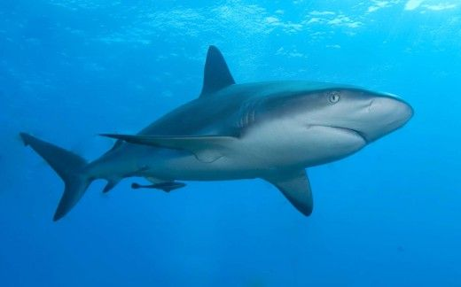 Guide to Different Types of Sharks - Learn more about the different types of sharks and how they are classified.