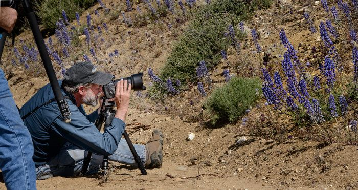 Wind Wolves:  David Zeroes In by Wayne Wong on Capture Kern County // You can feel the concentration as David Clendenen gets his lupine shot.  If I got down like that, I might need a lift up!
