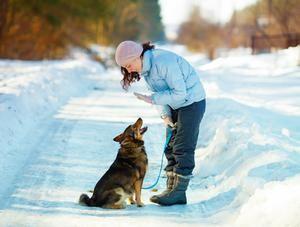 Mise en garde de l'Ordre des médecins vétérinaires du Québec à l'égard de l'usage de méthodes punitives dans l'éducation des animaux