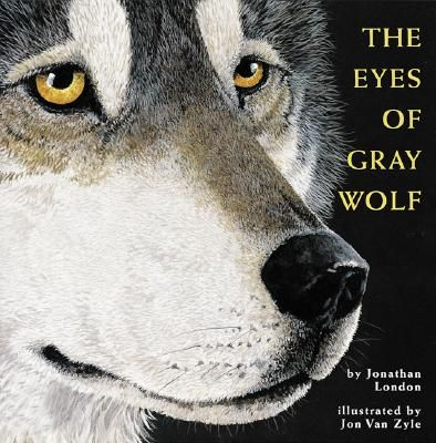 Picture No. 5  The Eyes of Gray Wolf