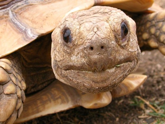 """""""A whole day? For little ol' me?""""  20 Turtles Celebrate World TurtleDay"""