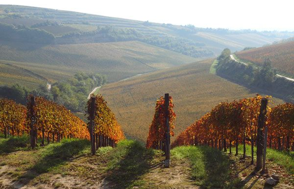 Our southernmost wine growing area, Villány has perfect conditions to produce full-bodied red wines.
