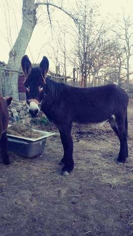 MIL ANUNCIOS.COM - Burros en León. Venta de venta de burros de segunda mano en León. venta de burros de ocasión a los mejores precios.