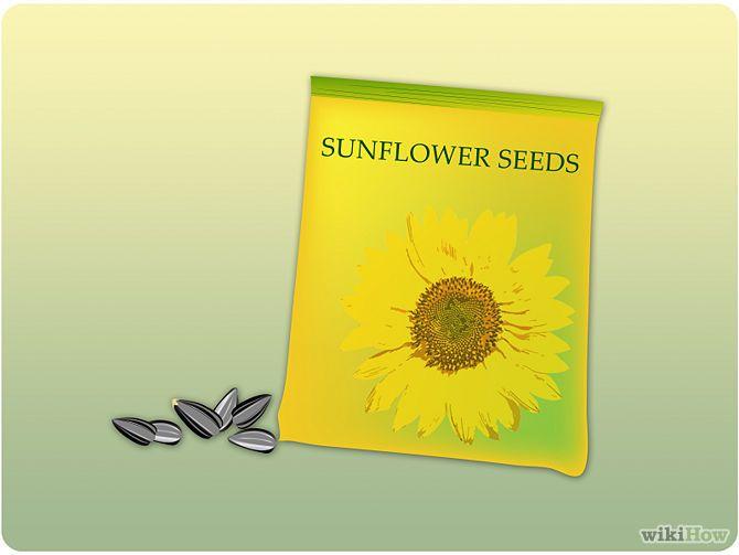 Plant Sunflower Seeds Step 1.jpg