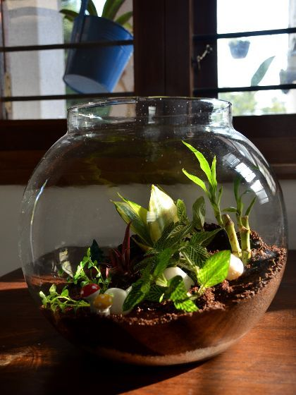 Shop For Round Terrariums | www.mudfingers.com