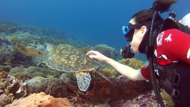 Diving Komodo National Park  Read more: http://www.traveltherenext.com/adventure/item/486-diving-komodo-national-park  #visitindonesia #komodo #nationalpark #diving #turtles #morays #sharks #experience #adventure #travel #traveltherenext