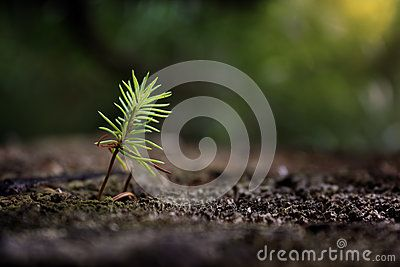 Young tree conifer growing in summer forest
