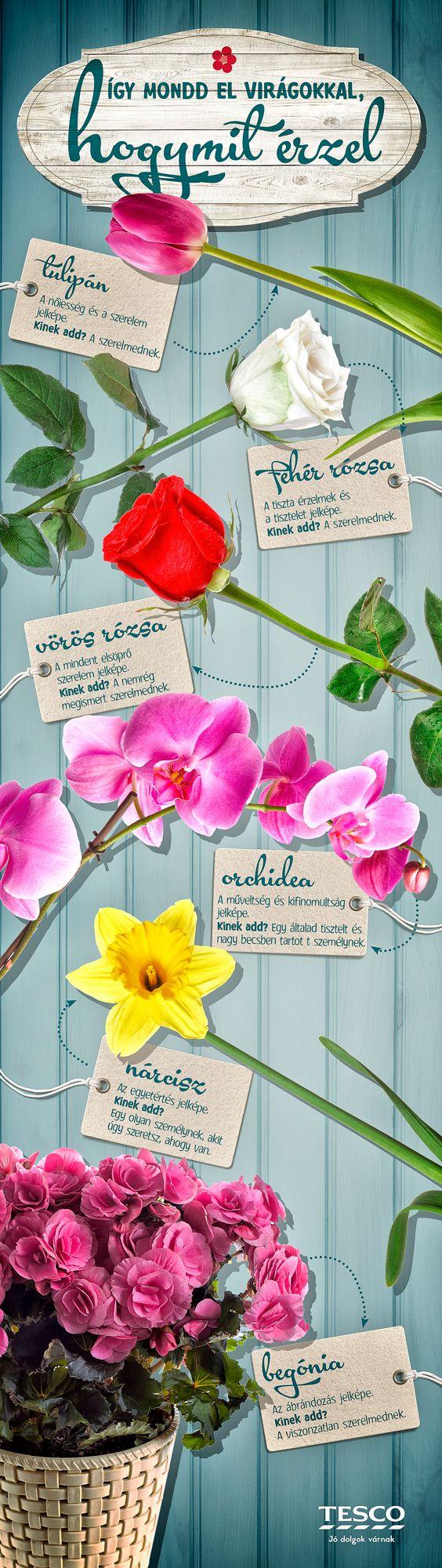 Virágot a virágnak, tartja a mondás, de melyik virágnak, milyen virágot illik adni? Ebből a Pin-ből megtudhatod! :) #nonap #rozsa #narcisz #begonia #orchidea #tulipan