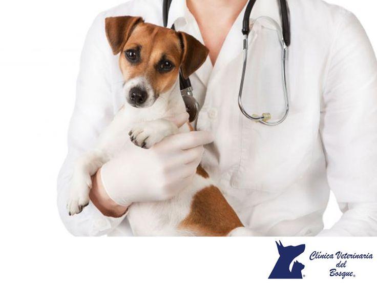 https://flic.kr/p/RvdJwV | Mascotas envenenadas. CLÍNICA VETERINARIA DEL BOSQUE 3 | CLÍNICA VETERINARIA DEL BOSQUE. Si observas cualquiera de estos síntomas en tu mascota, puede estar envenenada: Dificultad para respirar, vómitos o diarrea, irritación gástrica, tos y estornudos, depresión, salivación excesiva, convulsiones, temblores o espasmos musculares involuntarios, debilidad y pérdida del conocimiento o pupilas dilatadas, entre otros. Avisa vía telefonica para que te estemos esperando…
