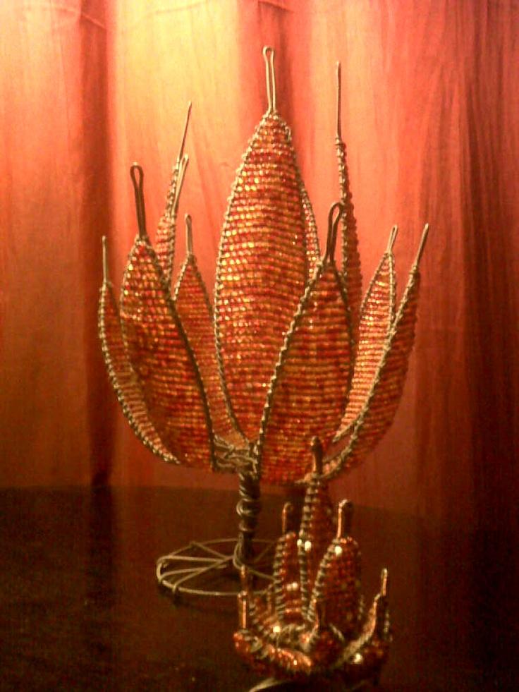 Beaded Aloes