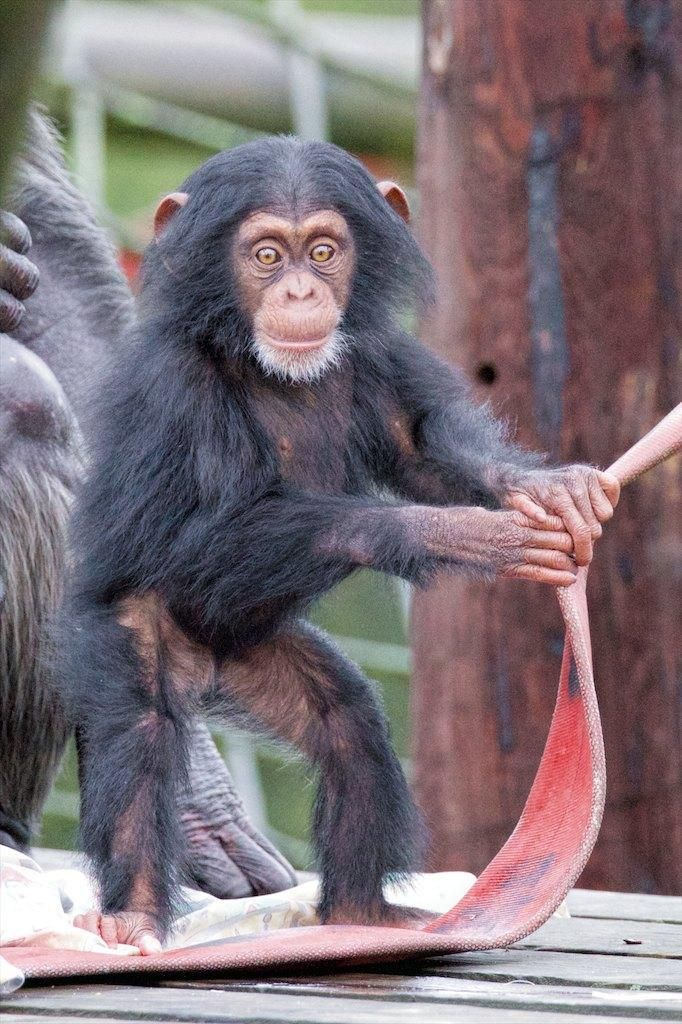 Image result for thelma monkey world