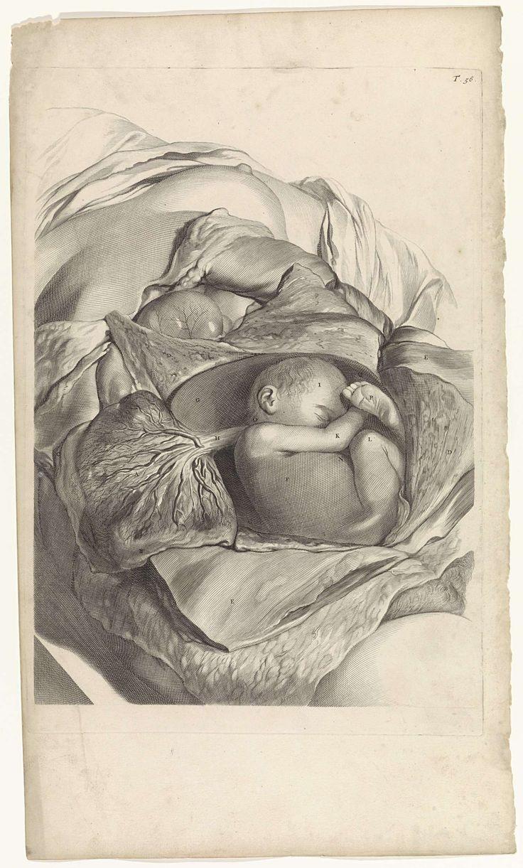 Anatomische studie van de binnenkant van de baarmoeder en een foetus, Pieter van Gunst, 1685