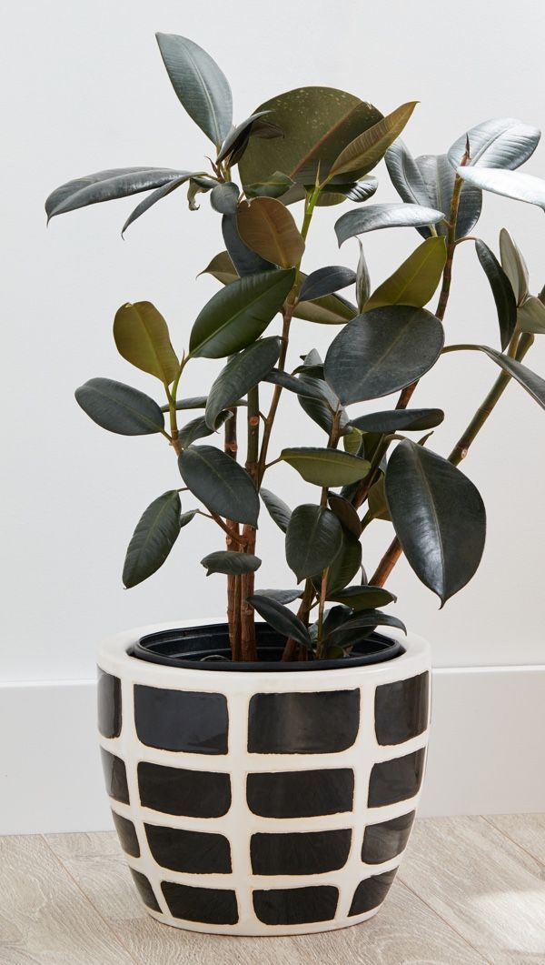 Fake Plants Are A Maintenance Free Replacement For Live In Your Home That Still