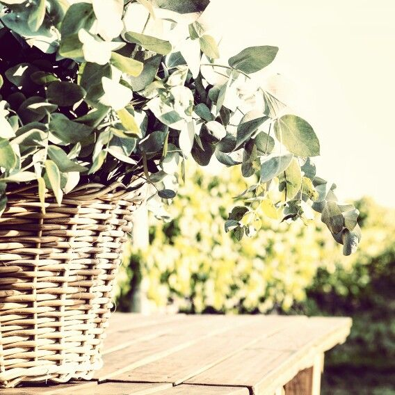 Eucalyptus, baskets and vines ...simply perfect