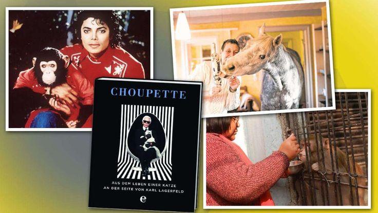 Pferd mit eigenem Zimmer, Affe als Alleinerbe, Katze mit Privatjet - Tierliebe extrem! *** BILDplus Inhalt *** http://www.bild.de/bild-plus/news/ausland/haustiere/haustiere-besitzer-extreme-tierliebe-40555708,var=a,view=conversionToLogin.bild.html