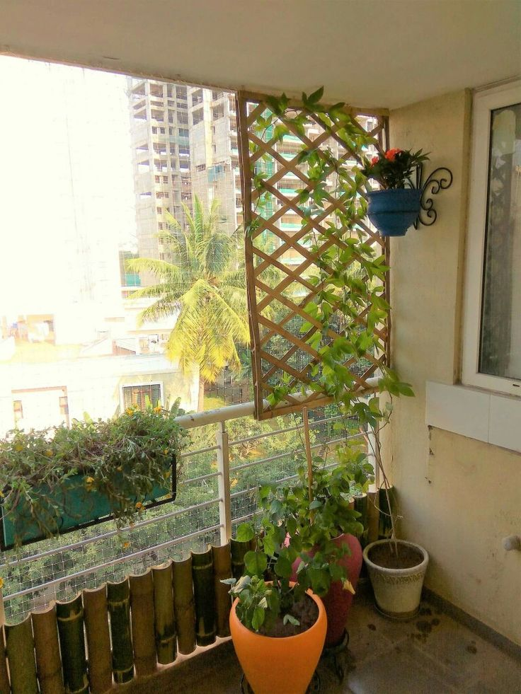 Bamboo Fence For The Creeper From My Sunny Balcony