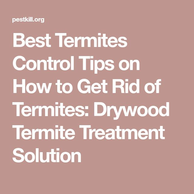 Best Termites Control Tips on How to Get Rid of Termites: Drywood Termite Treatment Solution