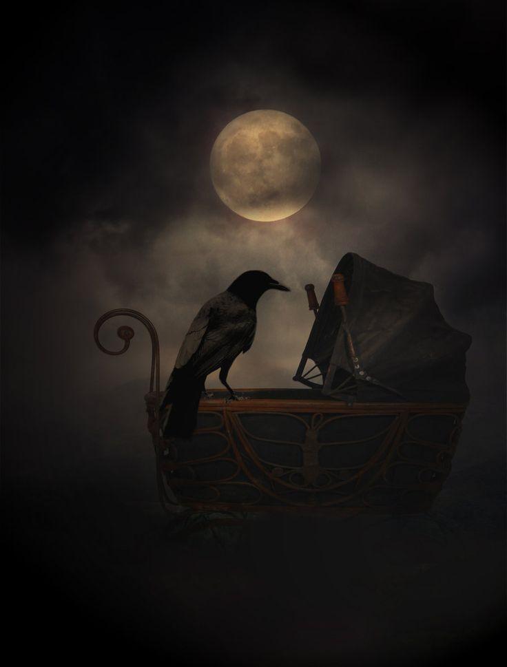 Crow by *dark--shepherd