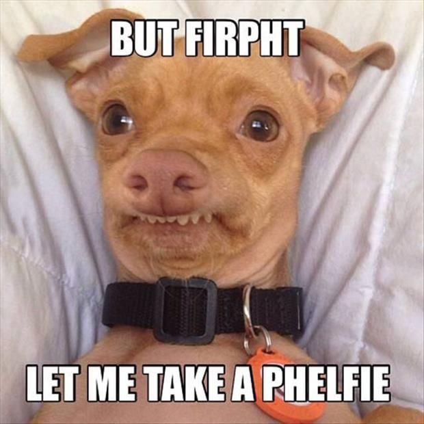 Top 40 Funny Animal Picture Quotes - SO FUNNY!!!!                                                                                                                                                                                 More