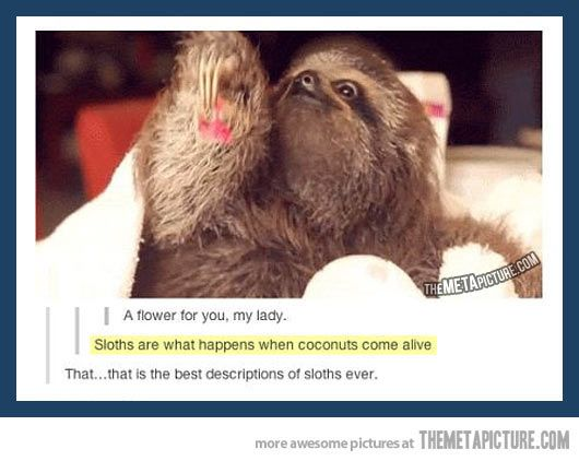 Best description of sloths ever…