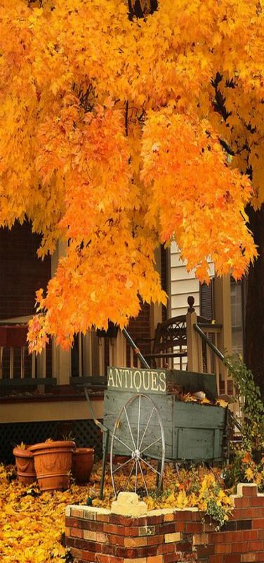 Autumn Antiques by groboski