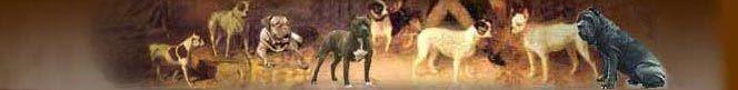 Molossers breeds (Molosser dogs, Molossers, Mastiff breeds)