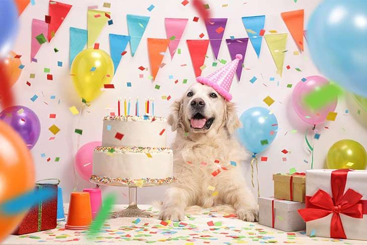 How To Throw A Birthday Party For Your Dog American Kennel Club Dog Birthday Pictures Dog Birthday Party Dog Birthday