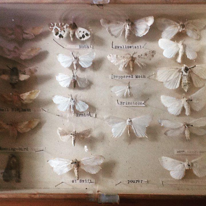die besten 25 motten im schrank ideen auf pinterest motten im kleiderschrank kolibri insekt. Black Bedroom Furniture Sets. Home Design Ideas