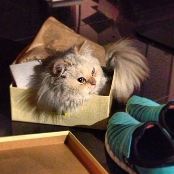 My ... box is my castle.
